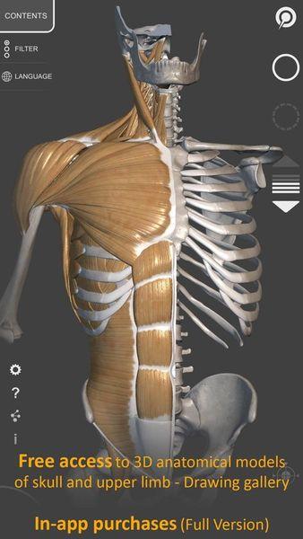 Скачать 3D Анатомия для художников на Андроид screen 2