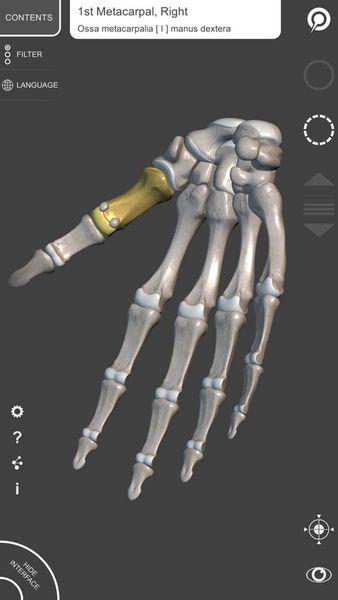 Скачать 3D Анатомия для художников на Андроид screen 3