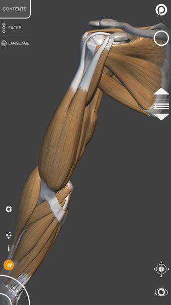 Скачать 3D Анатомия для художников на Андроид screen 4